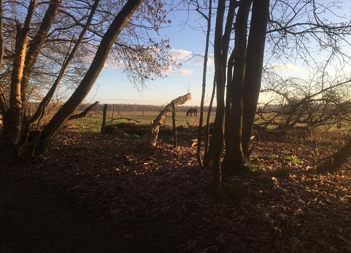 Blick zwischen Bäumen hindurch auf ein Pferd auf der Wiese