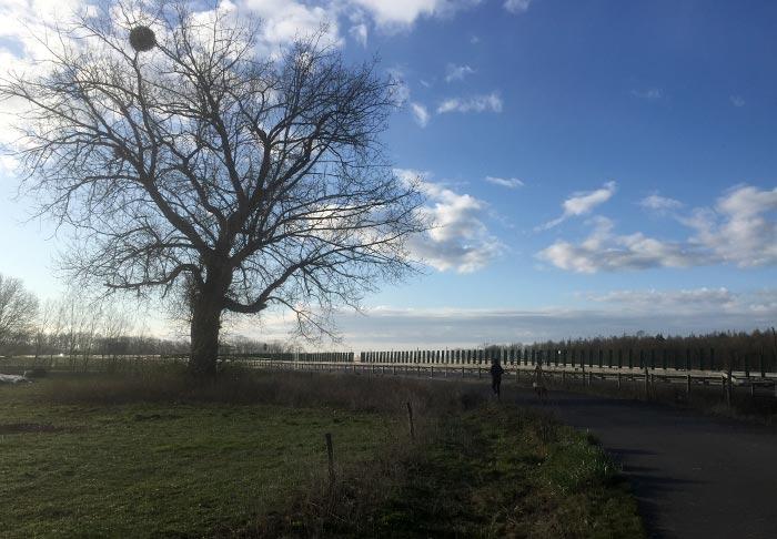 Läufer an der L76 neben einem kahlen dunklen Baum
