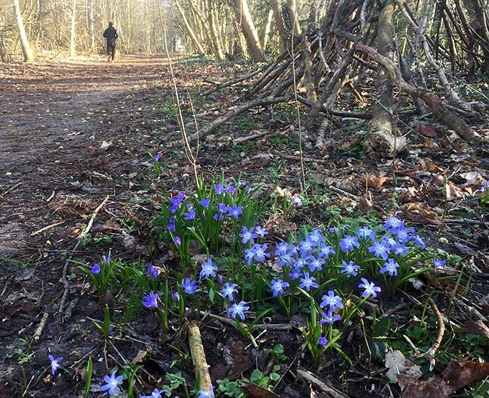 Erste Frühlingsblumen am Wegesrand
