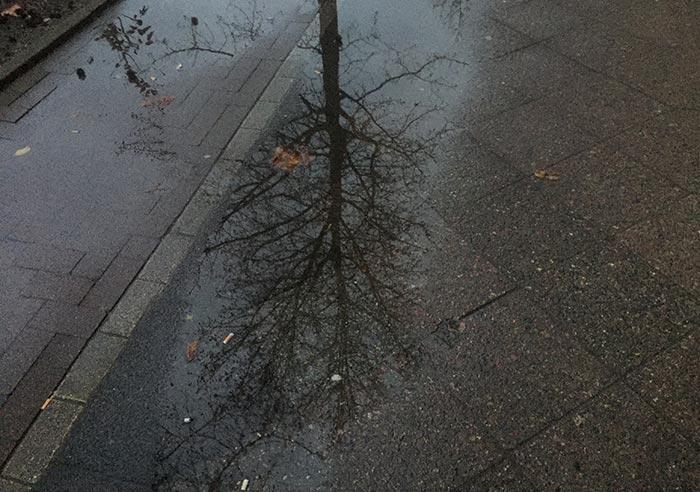Spiegelung eines winterlich kahlen Baumes in einer Pfütze