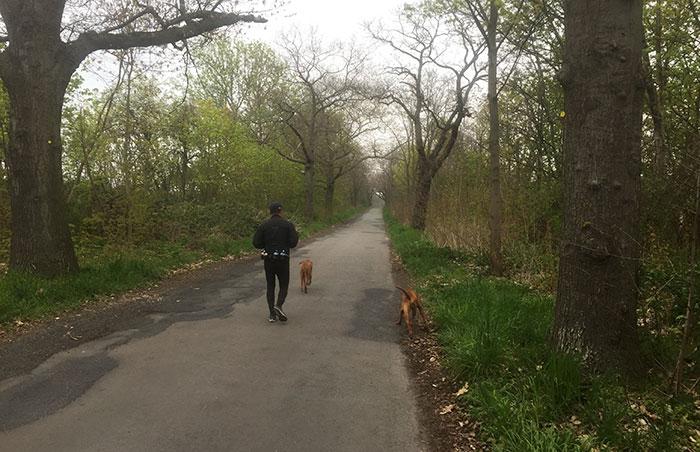 Läufer und Hunde auf einer alten unbefahrenen Straße