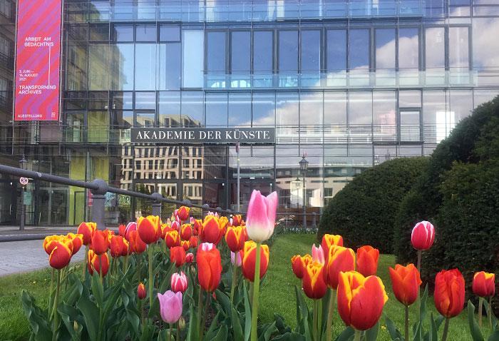 Blühende Tulpen vor der Akademie der Künste