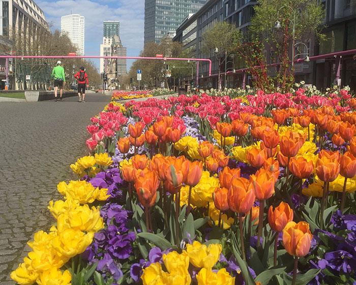 Üppige Blumenbeete auf dem Mittelstreifen der Tauentzienstraße
