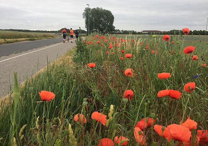 Mohnblumen am Straßenrand, im Hintergrund drei Läufer