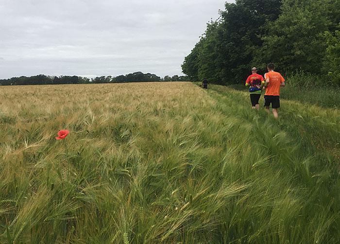 Läufer am Weizenfeld