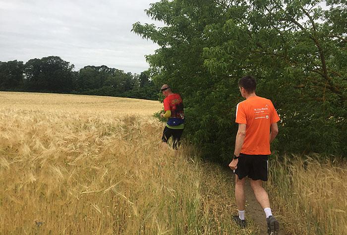 Läufer müssen am Feldrand eine umgestürzten Baum umgehen