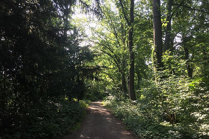Sonnenlicht scheint durch die Bäume auf einem baumumstandenen Parkweg