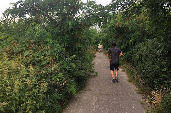 Läufer mit Hunden auf einem mit hohen Büschen fast zugewachsenen Betonweg