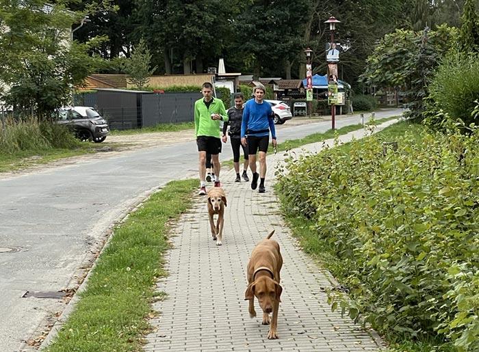 Läufer gehen, im Vordergrund zwei Hunde