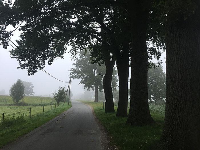 Weg führt an dunklen Bäumen entlang in den Nebel im Hintergrund
