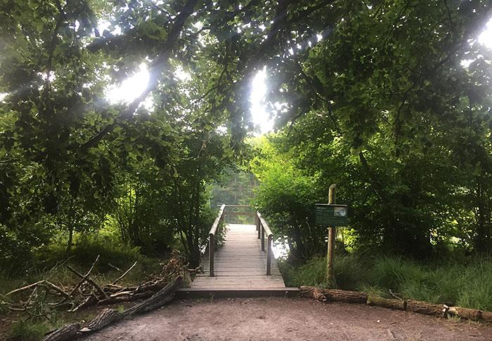 Steg am Schwarzen See, umrahmt von Gebüschen und Bäumen