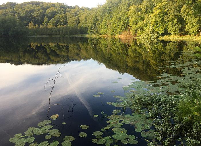 Schwarzer See, in dem sich die Uferbäume spiegeln, im Vordergrund Seerosen