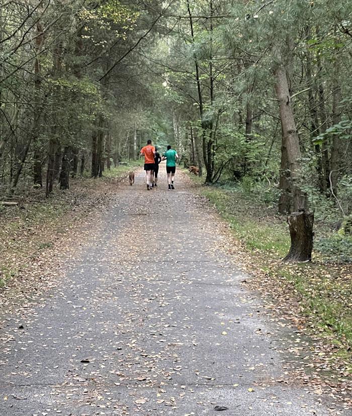 3 Läufer und 2 Hunde von hinten auf dicht von Bäumen umstandenen Weg (Berliner Mauerweg)